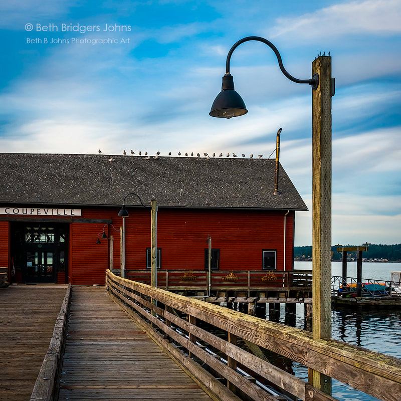 Coupeville, Gulls, Seagulls, Penn Cove, Coupeville Wharf, Whidbey Island, Beth B Johns Photographic Art