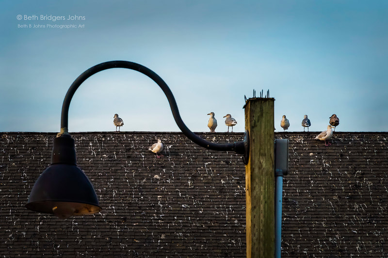 Coupeville, Penn Cove, Coupeville Wharf, Gulls, Seagulls, Whidbey Island, Beth B Johns Photographic Art