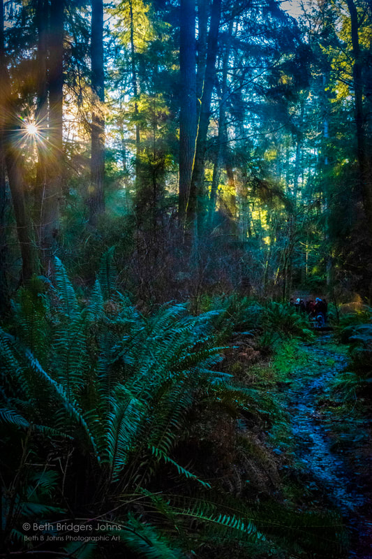 Rain forest, Whidbey Island, Beth B Johns Photographic Art