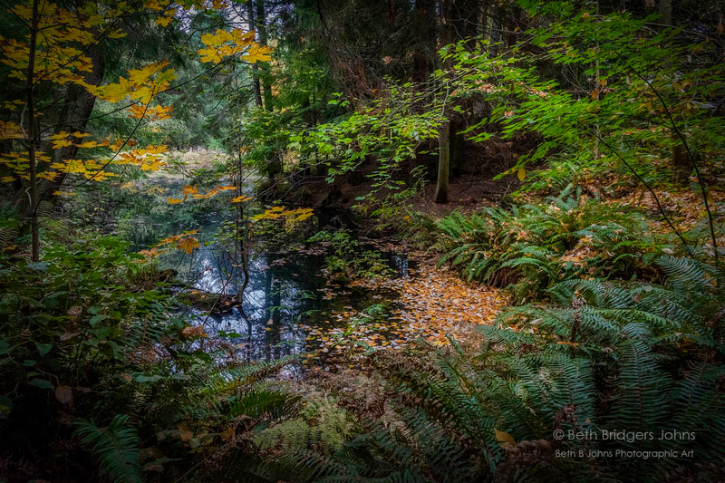 Whidbey Island, Fall Colors, Beth B Johns Photographic Art