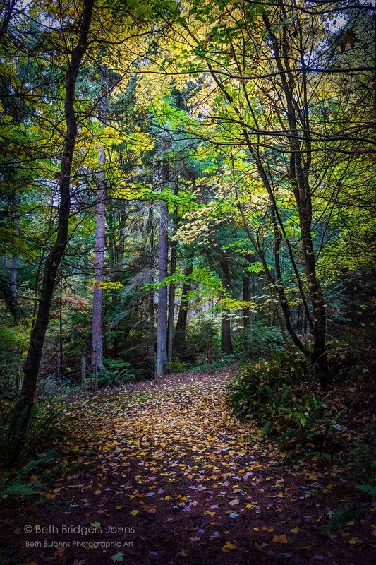 Whidbey Island, Fall Colors, Inviting Forest Path, Beth B Johns Photographic Art