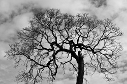 Garry Oak Tree, Beth B Johns Photographic Art